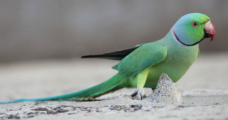 Noida Police Is Looking for a parrot since 6 months